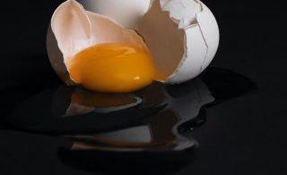 Asal Mula Warna Kuning Pada Telur 7