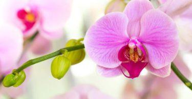 Spermatophyta: Pengertian, Ciri, Reproduksi, dan Klasifikasi 2