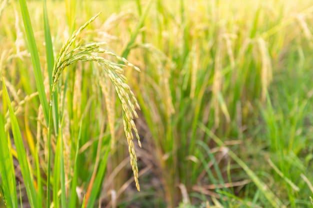 Tumbuhan Monokotil: Pengertian, Akar, Batang, Daun & Contoh 1
