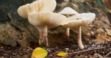Kingdom Fungi: Pengertian, Struktur, Klasifikasi & Ciri Umum 3