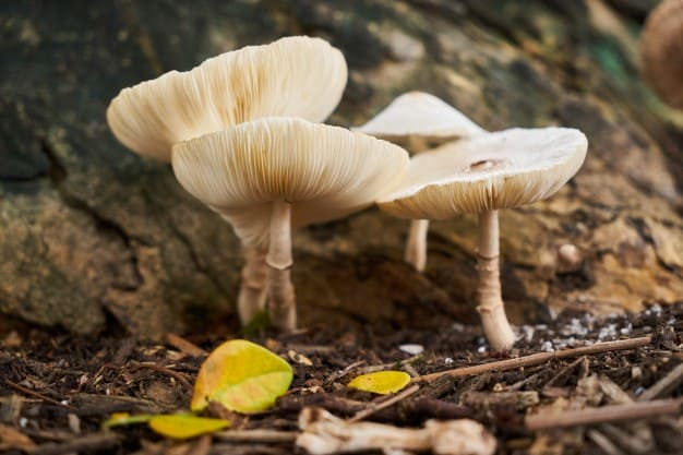 Kingdom Fungi: Pengertian, Struktur, Klasifikasi & Ciri Umum 1