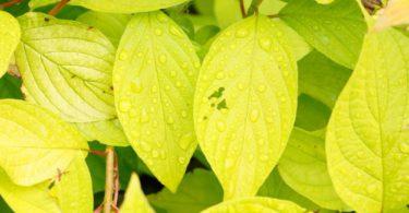 Jaringan pada Tumbuhan, Yuk Kenali Lebih Dekat 23