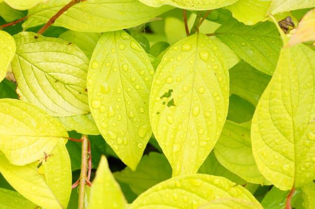 Jaringan pada Tumbuhan, Yuk Kenali Lebih Dekat 1