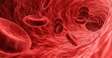 sel darah
