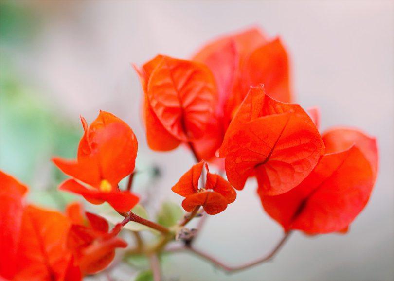 lirik lagu gugur bunga