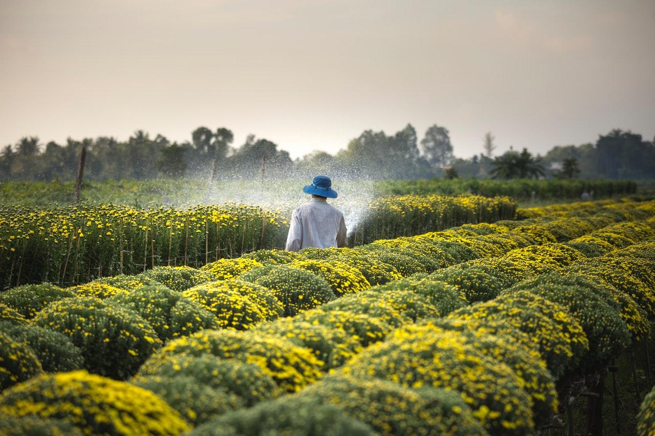 jenis usaha perseorangan pertanian