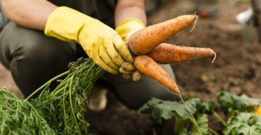 8 Prospek Kerja Jurusan Agribisnis yang Kian Menjanjikan di Indonesia 3