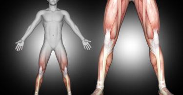 Pengertian Anabolisme: Proses, Ciri, Hormon dan Penyakitnya 23