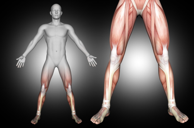 Pengertian Anabolisme: Proses, Ciri, Hormon dan Penyakitnya 1