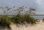 Iklim Subtropis : Ciri, Flora, Fauna, Negara Subtropis 6