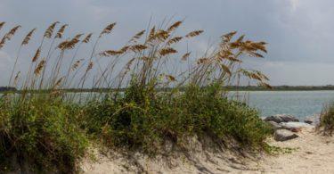 Iklim Subtropis : Ciri, Flora, Fauna, Negara Subtropis 1