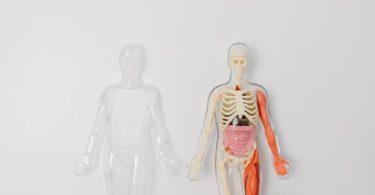 fungsi paru-paru
