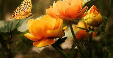 Bagian-Bagian Bunga & Fungsinya 1