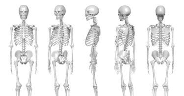 nama nama tulang dan fungsinya